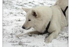 Woti_Schnee