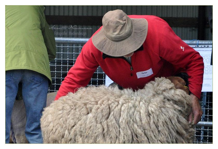 Peter und das Schaf